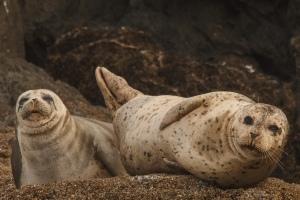 Oregon: Sea Lions