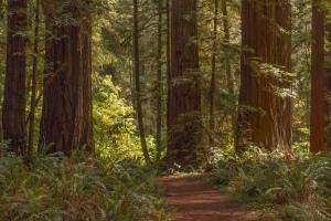 Oregon: Redwoods Ca